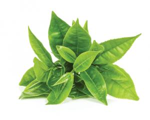 PhenGold extrait de feuille de thé vert